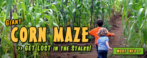 Naylor Family Farm Corn Maze Raleigh Nc Mazes Pumpkins Hayrides And More